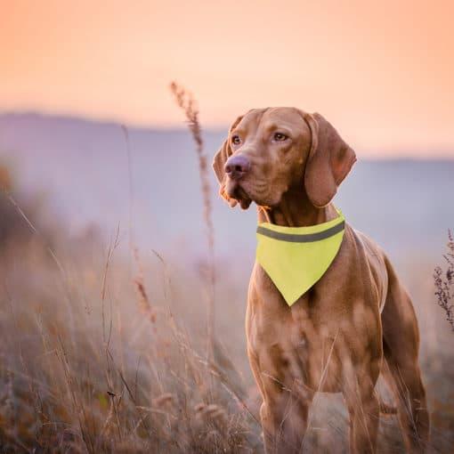 Reflektierendes Hunde-Halstuch